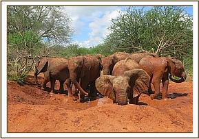 Orphans enjoying a bush mudbath