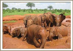 Orphans enjoy a mudbath