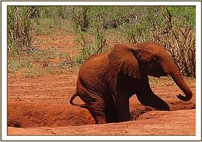 Layoni scratching after a mudbath