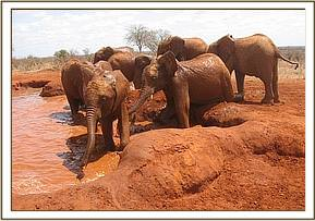 Kenia in the mud bath