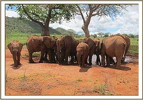 Orphans at the Baobab tree waterhole