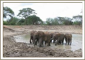 Orphans having at a mudwallow