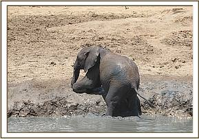 Kandecha coming out of the mudbath