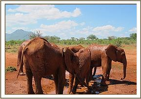 Orphans enjoying a cooling bath