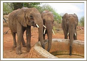 Lualeni, Kora and Challa taking water