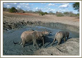 Orphans enjoy an evening mudbath