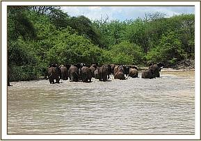 The orphans leaving the mudwallow
