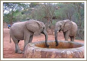 Kinna & Yatta drinking water at the stockade