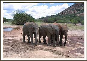 Challa, Lualeni and Kora at the mudwallow site