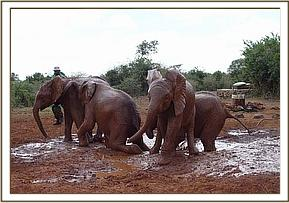 Lualeni the water baby & other orphans at mudbath