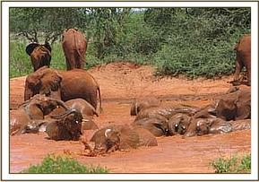Orphans enjoying themselves at a mudbath session