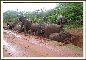 Orphans playing after rains.jpg