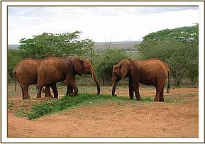 Mpala,Ndara & Loisaba at the stockade
