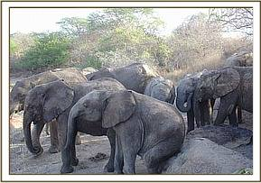 The orphans scratching against a rock