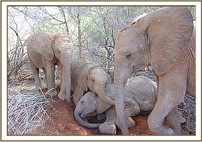 The Ithumba orphans playing