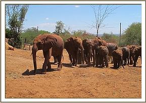 Naipoki group are led by the older orphans