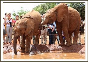 Lemoyian and Barsilinga at the mudbath