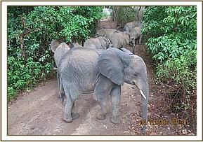 Murera and the orphans heading out to the forest