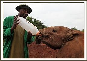 Ishaq-B having milk