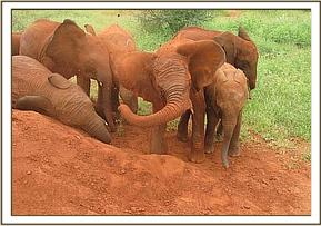 The orphans soil bathing