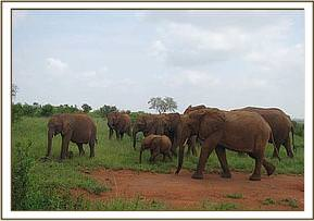 Big orphans congregation at water hole
