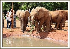 Ziwa and Quanza at the mudbath