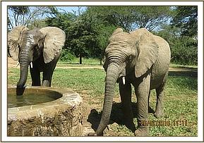 Quanza, left and faraja drinking water