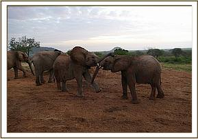 Lemoyian playing with Boromoko