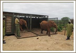 Kanjoro and Kilabasi come out of the truck