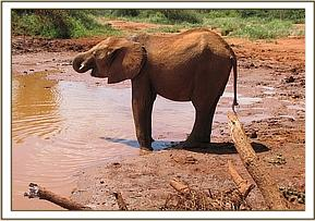 Kenia has a drink at the mudbath