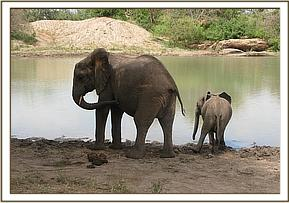 Wendi and Ithumbah drinking water
