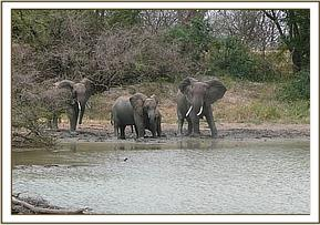 Wild family unit at the mudwallow