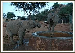 Makena and Nasalot having a drink