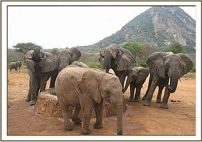 Murka with wild elephants