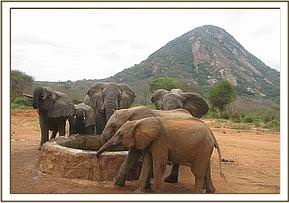 Chemi Chemi and Murka with wild elephants
