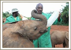 Narok having milk