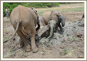 Yatta Taita and Selengai playing in the mud