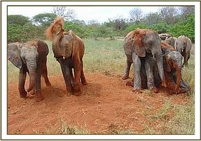 Orphans having a soil bath