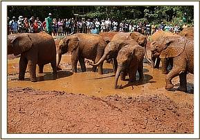 All the orphans joined in the mud antics