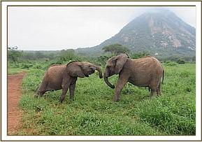 Lemoyian, left, plays with Bomani