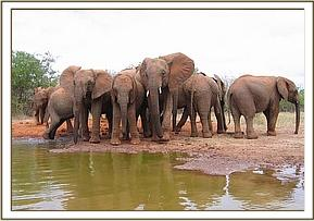 The orphans standing along the mudwallow