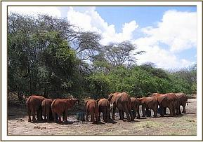 The orphans drinking water at mudwallow