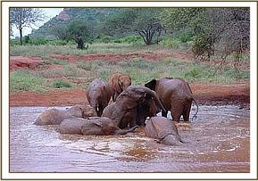 The Voi orphans enjoying a mudbath