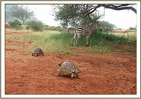 Serena takes a close look at the tortoises