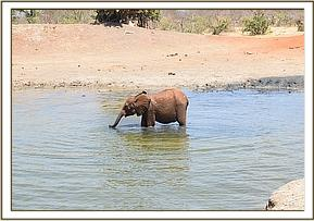 Rapa in the water hole