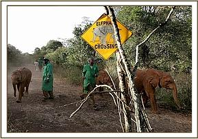 The elephant crossing at the Nursery
