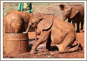 Turkwel playing in the mud