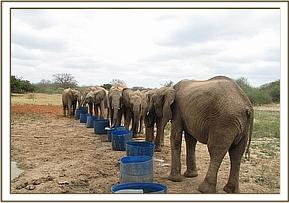 Orphans having a drink of water on a hot day