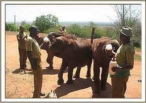 The orphans having a milk feed