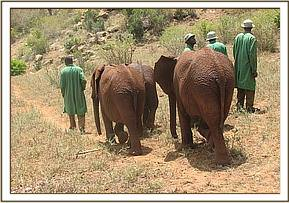 The orphans head out to the bush for the day